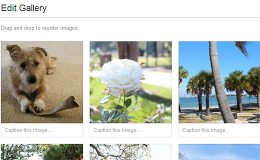 Add captions to photos in gallery